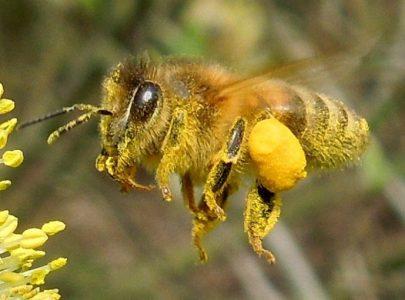De grote bijen-informatiepagina