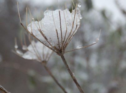 Winter fotowedstrijd