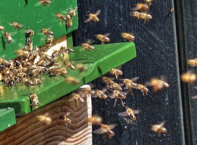 Wasven presenteert biologische stadshoning