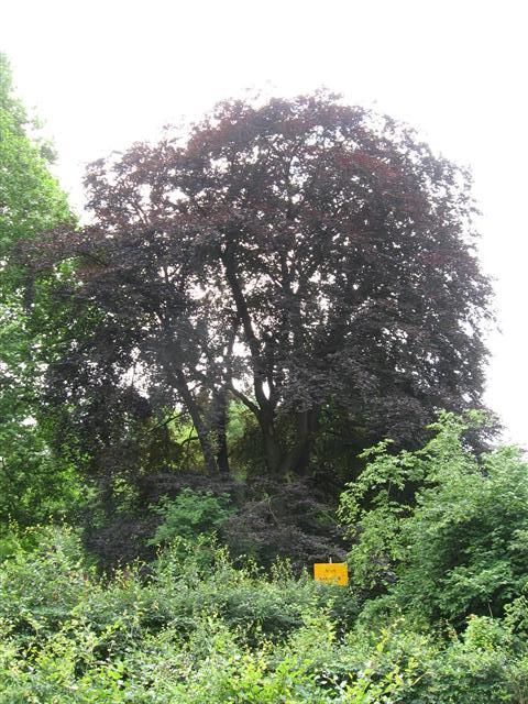 Aftakelende boom krijgt aangepaste omgeving voor waardig einde