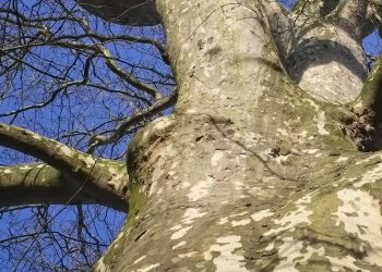 Karakterbomen in het Wasvengebied