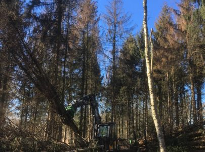 Beheer van het sparrenbos