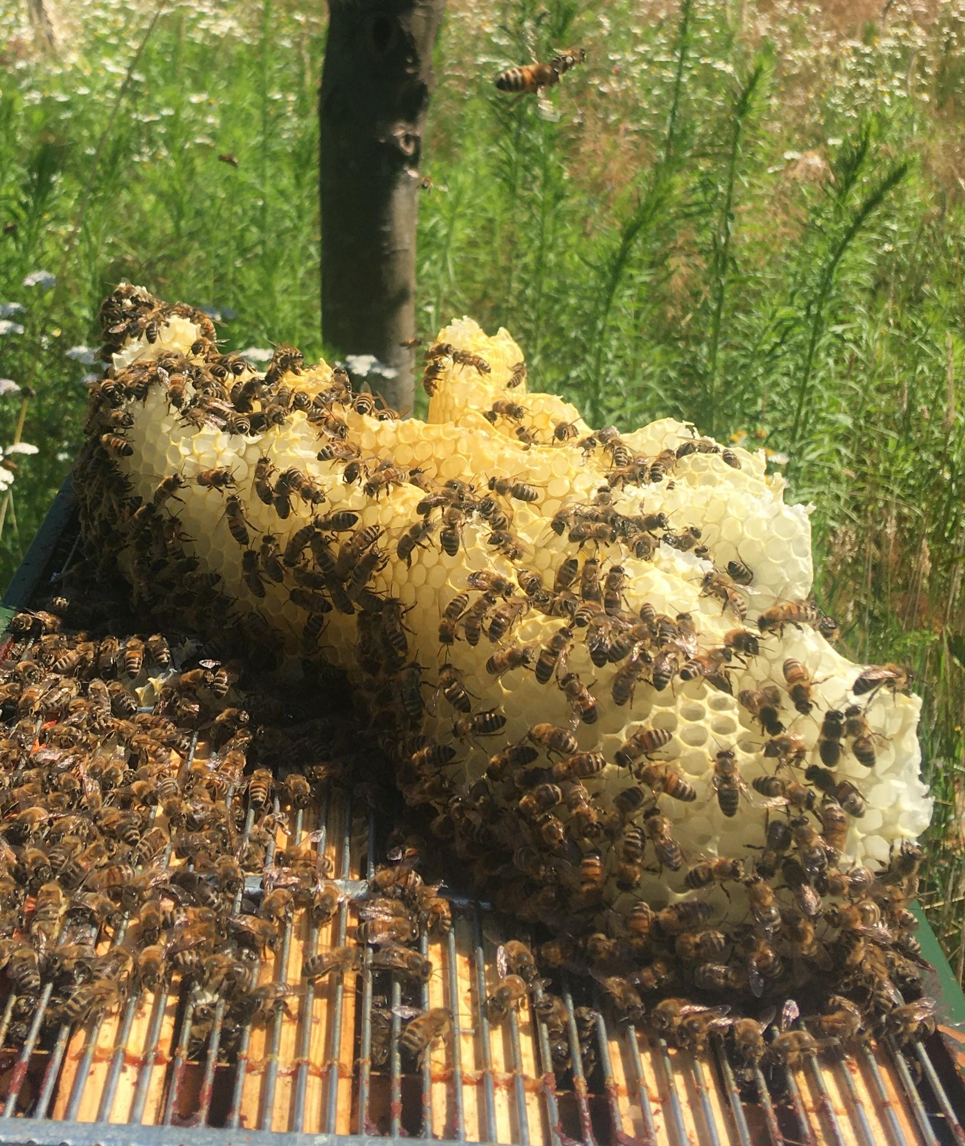 Het Honinggraatvermoeden