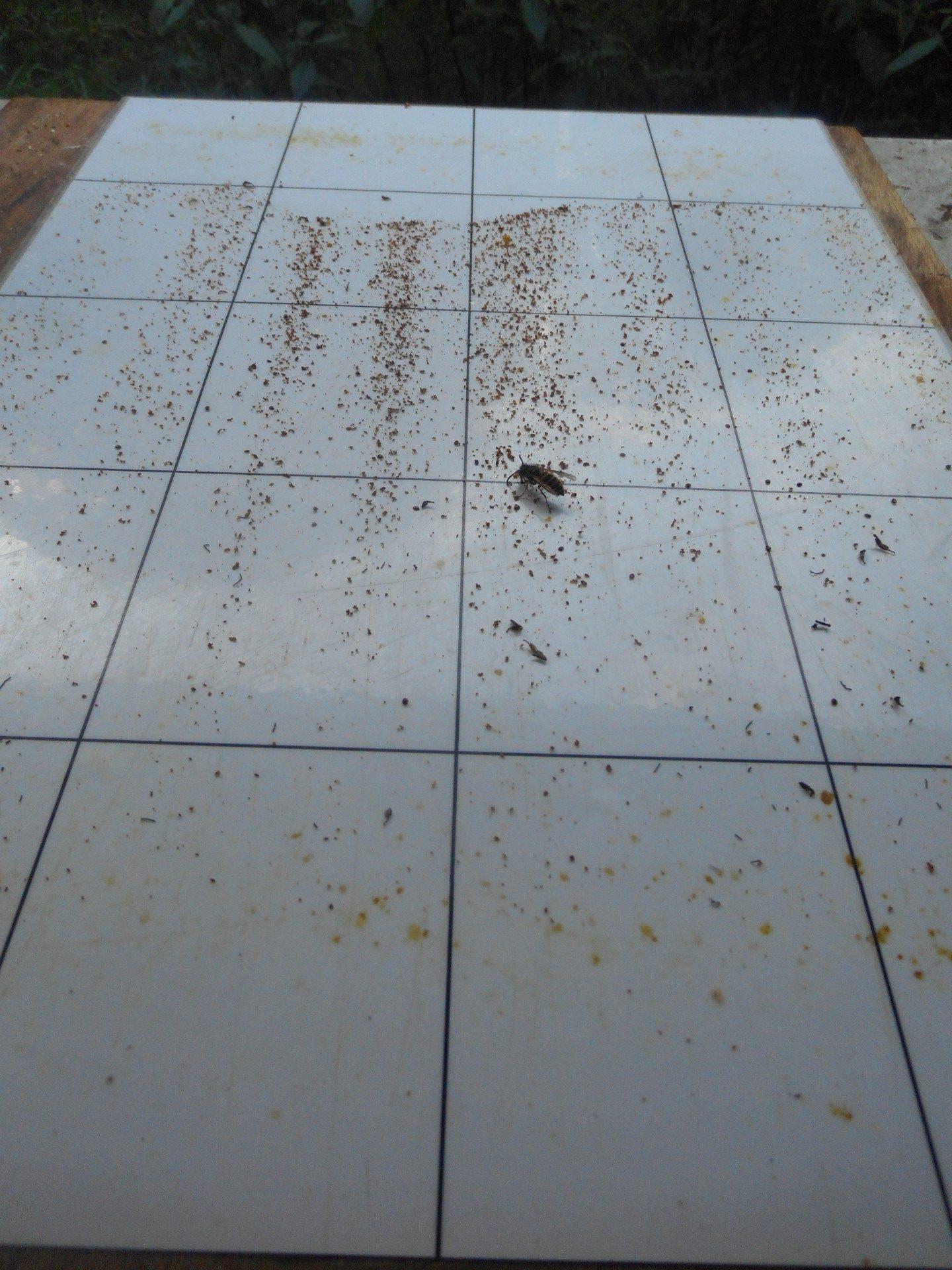 Straten in de bijenkast