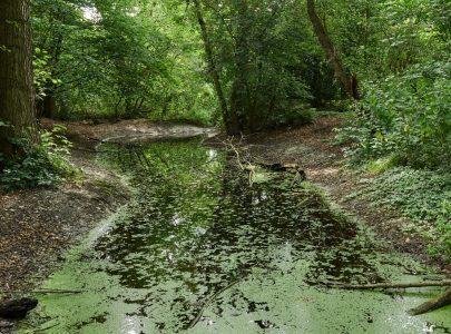 De poëzie van Wasvens waterwegen in woord en beeld