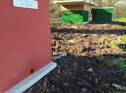 Bijen-project op het Wasven