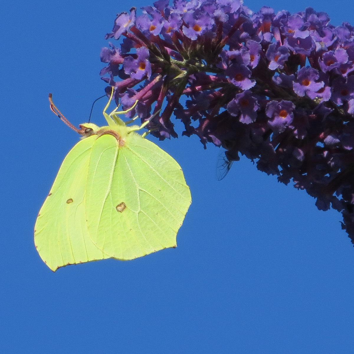 Vlinders voelen zich thuis op het Wasven