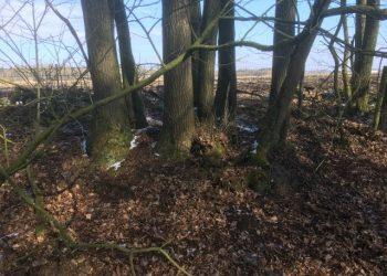 Verslag cursus: hakhout- en geriefbosjes