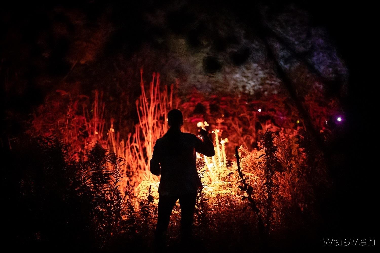 Nachtvlindertelling